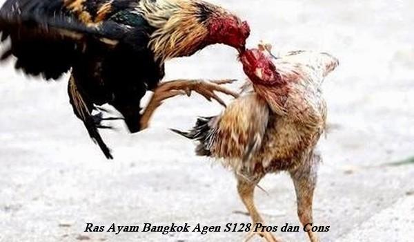 Ras Ayam Bangkok Agen S128 Pros dan Cons